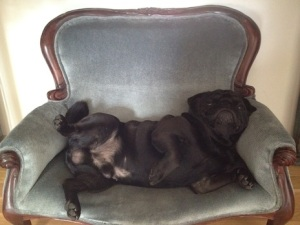 pug couch
