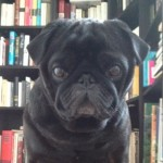 cropped-pug-and-books.jpg