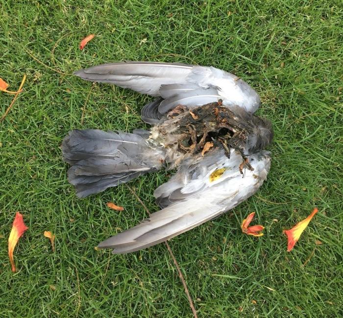 bird - no insides.jpg