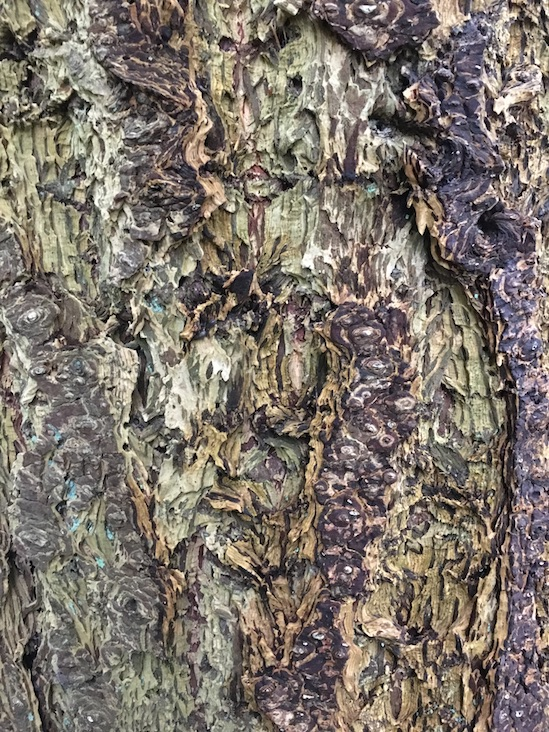 living tree bark