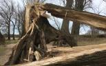 IMG_3925 tree