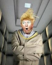 whack job trump